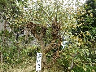 kaikouzu1125